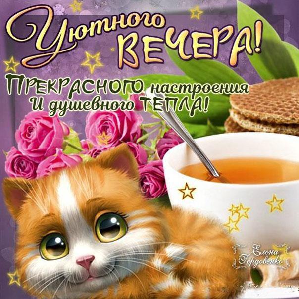 Душевного вечера открытка цветы кофе милый котик