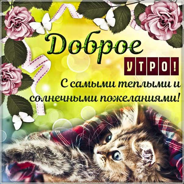 Открытка доброе утро теплые пожелания. Котик утро, отличного утречка цветы, утренний позитив, текст, красивая надпись, со стихом, мигающая, картинки.